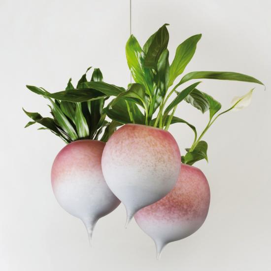pot design en verre pour les plantes